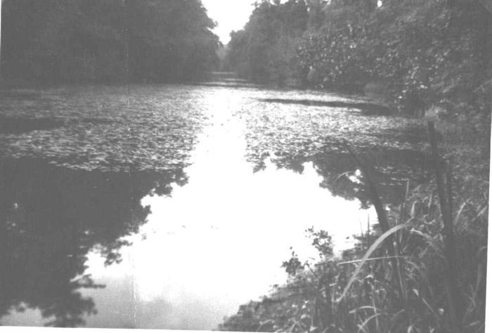 buildng-lake
