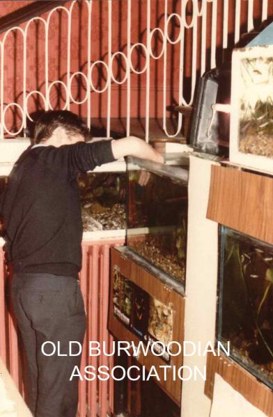 85-aquarium1